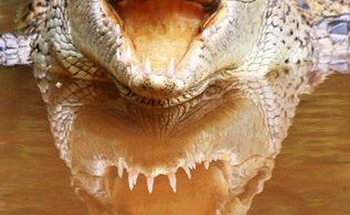 Nota principal cocodrilo 2