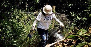 zika 1 Cajita 3